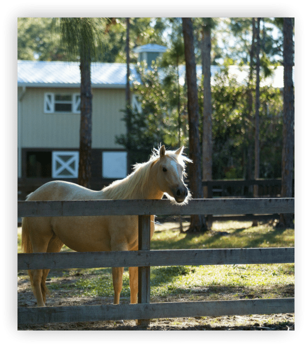 Tripple C Farms of Florida Private Stabling